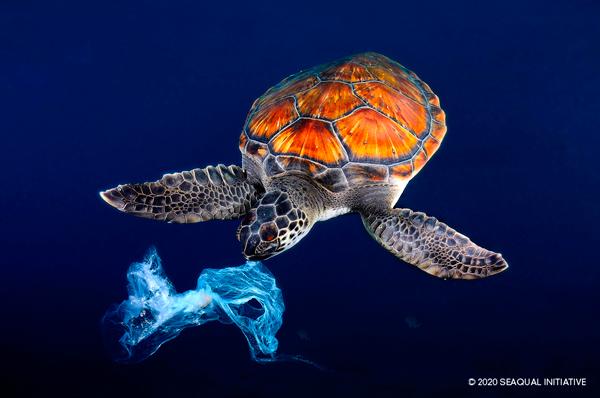 Une tortue jouant avec un sac plastique